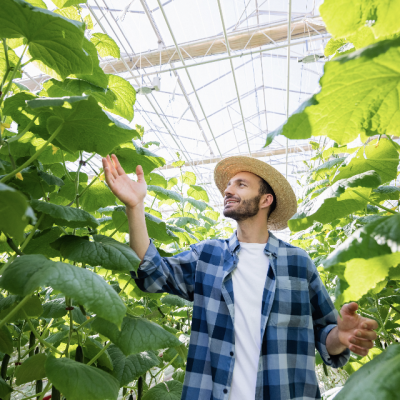 Agriculture-Biologique-Photo-BioBeeBox